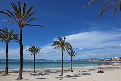 Palm trees on the beach in Palma de Mallorca